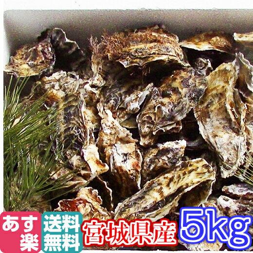 あす楽対応!牡蠣 5kg(約60粒)クール送料無料!宮城県産 殻付き 牡蠣 殻付き 無選別牡蠣 牡蠣 殻付 カキ 加熱用 一年子 松島牡蠣屋 BBQ 母の日 父の日