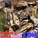 あす楽対応!牡蠣 10kg(約135粒)送料無料!宮城県産 殻付き 牡蠣 殻付き 無選別牡蠣...