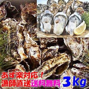 【あす楽対応】牡蠣 3kg 3キロ 殻付き 牡蠣 殻付き 牡蛎 牡蠣 殻付 【生は終了で使い勝手抜群の冷凍出荷です】宮城県産 無選別牡蠣 カキ 加熱用 松島牡蠣屋 送料無料 BBQギフト お歳暮 バーベ