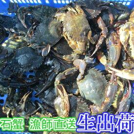 生出荷!食用イシガニ 石蟹4kg 活状態での梱包 松島牡蠣屋 漁師の店長自ら漁獲です!目安:4kgで40杯程度