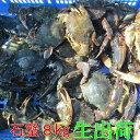 生出荷!食用イシガニ 石蟹8kg 活状態での梱包 松島牡蠣屋 漁師の店長自ら漁獲です!目安:8kgで80杯程度