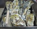 あす楽対応! 日本三景松島産 殻付き牡蠣殻付き 一個蒸し缶2kg(約17粒) 蒸しカンカン 送料無料 加熱用