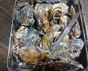 あす楽対応!日本三景松島産 殻付き牡蠣殻付き 無選別蒸し缶2kg(約30粒) 牡蠣 殻付 蒸しカンカン 送料無料 加熱用
