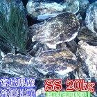 SSサイズ20kg(約220粒)冷凍便送料無料!宮城県産殻付き牡蠣殻付き殻付カキ加熱用一年子松島牡蠣屋無選別牡蠣