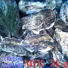 重量MIX5kg(約50粒)冷凍便送料無料!宮城県産殻付き牡蠣殻付き殻付カキ加熱用一年子松島牡蠣屋無選別牡蠣