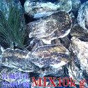 無選別MIX10kg(約120粒)冷凍便送料無料! 宮城県産 殻付き牡蠣 殻付き 殻付 カキ 加熱用 一年子 松島牡蠣屋 無選別…