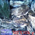 重量MIX10kg(約100均粒)冷凍便送料無料!宮城県産殻付き牡蠣殻付き殻付カキ加熱用一年子松島牡蠣屋無選別牡蠣