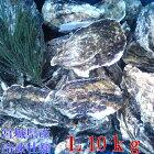 約100g以上のみ10kg(約85粒)冷凍便送料無料!宮城県産殻付き牡蠣殻付き殻付カキ加熱用一年子松島牡蠣屋無選別牡蠣