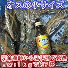 宮城県産ワタリガニオス小サイズ渡り蟹ガザミ梭子蟹ケジャンにも!活発送1kg(約7杯)〜