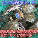 宮城県産 ワタリガニ オス特大サイズ 渡り蟹 ガザミ 梭子蟹 ケジャンにも!活発送 3kg(約7杯)