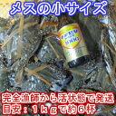 宮城県産 ワタリガニ メス小サイズ 渡り蟹 ガザミ 梭子蟹 ケジャンにも! 活発送 1kg(約6杯)