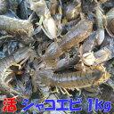 活梱包海水ごと輸送!蝦蛄海老 シャコエビ しゃこえび 1kg(20-32匹)宮城県松島産 漁師直送品 発送地域限定