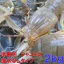 活梱包海水なしタイプ!蝦蛄海老 虾蛄 シャコエビ しゃこえび 2kg(40-64匹)宮城県産 漁師直送品 虾蛄