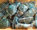 宮城県産 ワタリガニ メス 渡り蟹 ガザミ 活発送 1kg〜中サイズ1kgで4−5杯くらいです。