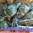 ワタリガニ メス大と特大(2kgで約4-6杯) 渡り蟹 ガザミ 梭子蟹 ケジャンにも! 活発送 2kg送料無料 宮城県産