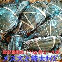 ワタリガニ メス大と特大(1kgで約2−3杯) 渡り蟹 ガザミ 梭子蟹 ケジャンにも! 活発送 1kg〜宮城県産