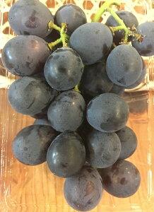巨峰 奈良産【野菜セット同梱で送料無料】