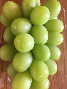 シャインマスカット 山梨県産【野菜セット同梱で送料無料】
