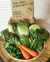 野菜10品以上セット 新鮮な野菜を毎日厳選してお届けします! 【本州・九州・四国は送料無料】【 野菜 セット 野菜セ…
