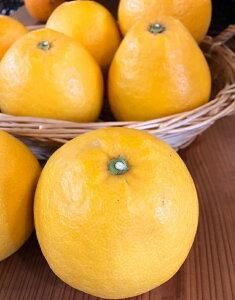 ジューシーオレンジ 和歌山県産【野菜セット同梱で送料無料】