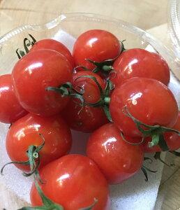 プチぷよ トマト 三重産【野菜セット同梱で送料無料】