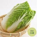 白菜 長野産【野菜セット同梱で送料無料】