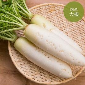 大根 北海道・青森産【野菜セット同梱で送料無料】
