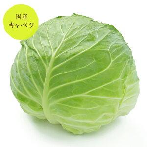 キャベツ 群馬・長野産【野菜セット同梱で送料無料】