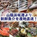 【送料無料】山陰直送「朝とれおまかせ鮮魚・魚介3000円(税別)セット」