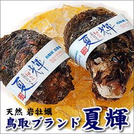 天然岩牡蠣「夏輝(なつき・ナツキ)」超デカデカサイズ 3個(帯付き) (かき、カキ、イワガキ、いわがき、イワカキ、いわかき、岩がき、岩ガキ)