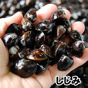 大和しじみ(冷凍)500g (青森産)[砂ぬき]味噌汁に 使いやすいジッパー付きの袋に入ってます(シジミ、貝)