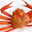 (セール)ボイル紅ずわいがに(冷凍)1尾【浜坂産】※足折れ混じり(姿、紅ズワイガニ、紅がに、紅ガニ、蟹)
