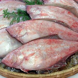 下処理済・赤かれい【冷凍】3尾×約24-27cm程度 1匹付けサイズです【浜坂産】下処理済みなので、解凍後、すぐに調理できます(赤カレイ・カレイ・鰈)