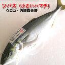 ツバス(ハマチ)(生冷凍・調理済み) 1尾 約300-399g(調理前重さ) 【浜坂産】