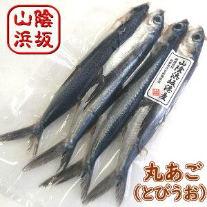 丸あご(とびうお)[生冷凍・調理済み] 4尾入りで約300〜370g(調理後の重さ) 【浜坂産】(丸アゴ、飛び魚、飛魚)
