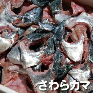 【送料無料セール】寒ザワラのカマ(冷凍) 約1kg 【浜坂産】一年で最も脂がのった時期のサワラのカマです(さわら、鰆)
