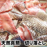 (セール)訳あり・天然真鯛切り落し(冷凍)約400g(山陰浜坂産)(たい・タイ)
