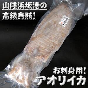 アオリイカ(冷凍) 超特大 約1.9-2.1kg前後 1杯入(胴長さ:約35-37cm程度)【浜坂産】(あおりいか・水いか・水イカ・もいか・モイカ・烏賊・高級)
