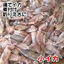 小イカ(冷凍) 約200g(浜坂産) ※今回は主にスルメイカです。 (小型のイカ・豆いか・釣・えさ・エサ・餌)