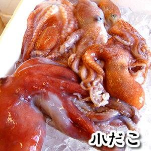 小だこ(生冷凍) 業務用 約3kgブロック 【浜坂産】 ※大小混ざり とれたてを冷凍したもので、下処理をしておりません。(小ダコ、たこ、タコ、蛸)