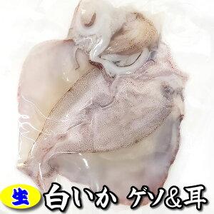生白イカのゲソ&耳(冷凍) 約180g入【浜坂産】 バーベキューに!(白烏賊・白いか・烏賊・やりいか・ヤリイカ・ケンサキ・けんさき)