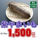 珍しいやまいも!【農薬・化学肥料不使用】こだわり栽培 紫やまいも(約500g)
