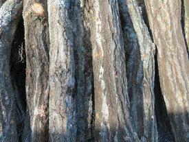 (予約販売)原木しいたけ植付済み ほだ木 5本セット