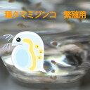【メール便発送可】タマミジンコ 培養用 種ミジンコ 生体100匹程度 金魚・めだか・熱帯魚等の生餌 エサ 【クロレラ水 …