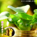 (水草) ホテイアオイ めだかの卵付き(約20個以上) 1株セット ホテイ草 水草 浮草 たまご メダカ