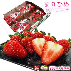 いちご まりひめ 和歌山オリジナル品種 Mサイズ 250g(約25粒) x 4パック 送料無料 TVでも紹介された幻のイチゴ 秀品 イチゴ 苺 ご家庭・ご贈答用
