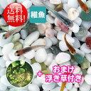 (メダカ) めだか おまかせ紀の川ミックス 未選別 稚魚(SS〜Sサイズ) 20匹セット + おまけ浮き草付き 送料無料 ミック…