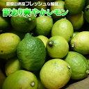 レモン 10kg(箱込約10kg 9kg+保証分500g) 国産 訳あり・ご家庭用 / 檸檬 送料無料(東北・北海道・沖縄県除く)…