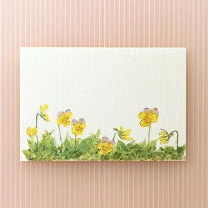 季節の絵はがき[春]ビオラ 横