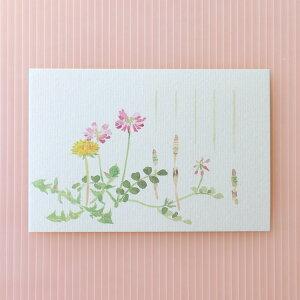 季節の絵はがき[春]春草